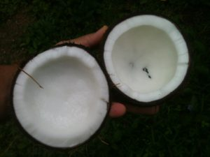 Coconut added to coffee greatly enhances its nutritional value.